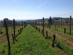 Vines at Torii Mor