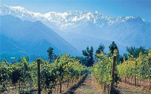 The Andes provide water for the vineyards of Chile